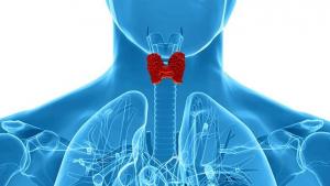 Perfil tiroideo