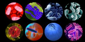 Rotavirus en heces